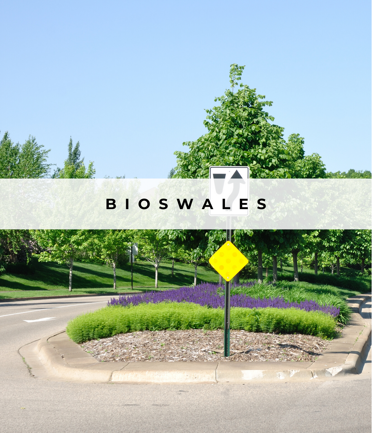 Image of Bioswales